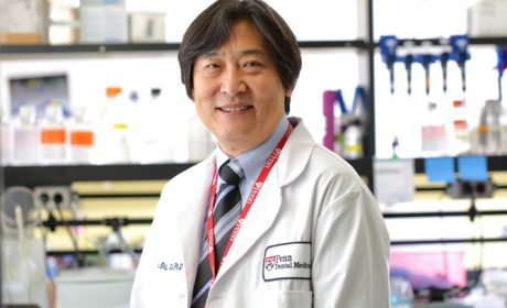Penn Dental Study Shows How Stem Cell Therapy Protects Bone in Lupus