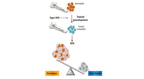 Priming the Immune System to Attack Cancer